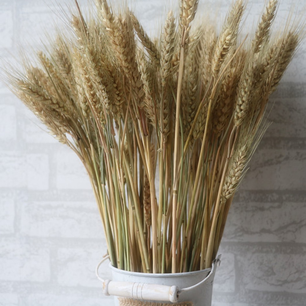 100 Uds., tallos de trigo Natural, decoración de trigo seco para Navidad, boda, hogar, oficina, decoración