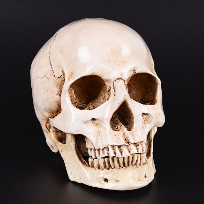 Resin Replica Medical Model Lifesize 1:1 Halloween Home Decoration High Quality Decorative Craft Skull