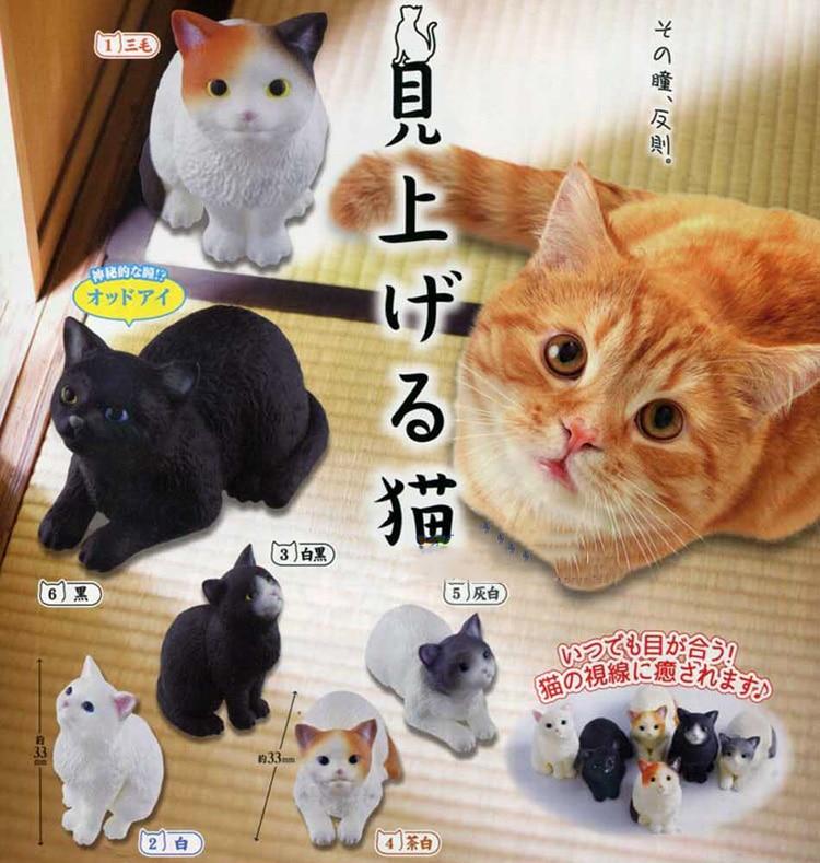 Japonés original cápsula juguetes kawaii lindo para mascotas gato naranja Pelo Corto británico Scottish Fold gatito gato educativos figuras Decoración
