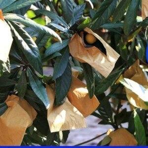 100 шт. фрукты Бумага анти птицы Защитная расти инструментальных сумок от моли Водонепроницаемый сумки культивирования детской фрукты инструмент по уходу за ногами