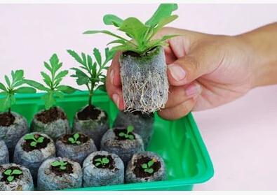 30pcs,25mm jify peat Planting,cutting,garden supplies,seed starter,vegetable seeds pellete.new planter,spring need