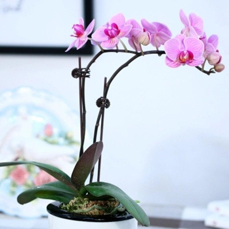 Pinzas para plantas 100 Uds. Soporte para plantas de jardín para enrejado, cuerda para invernadero, herramientas para jardín Phalaenopsis