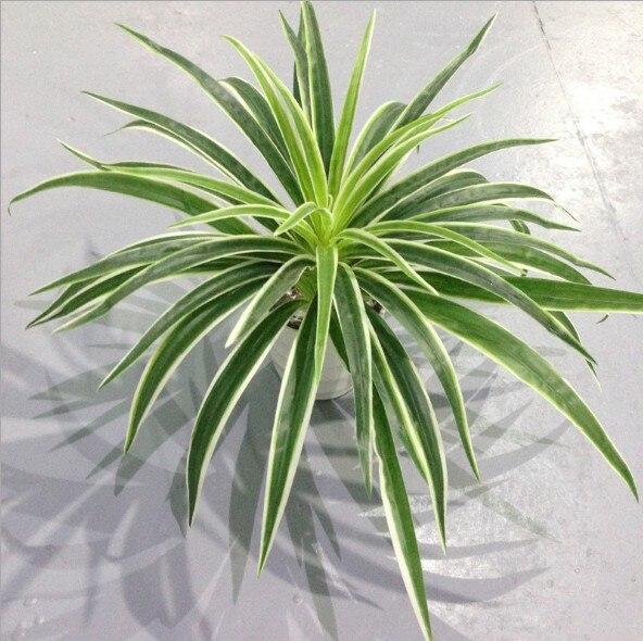 Plantas de plástico artificiales, rama de Chlorophytum, hogar decorativo, plantas falsas, Decoración de mesa en macetas para interiores, sin maceta