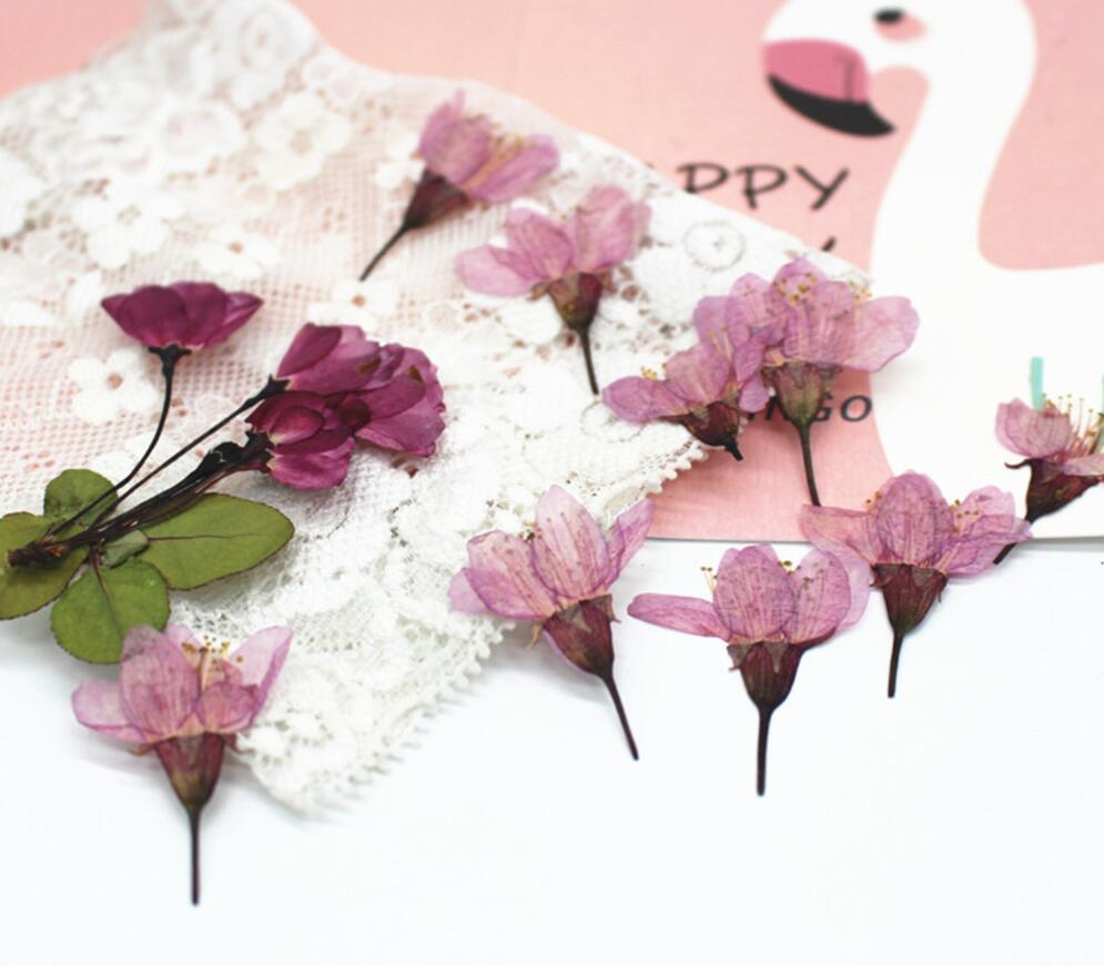 120pcs Pressed Dried Cherry Sakura Flower Plants Herbarium For Resin Jewelry Making Postcard Frame Phone Case Craft DIY