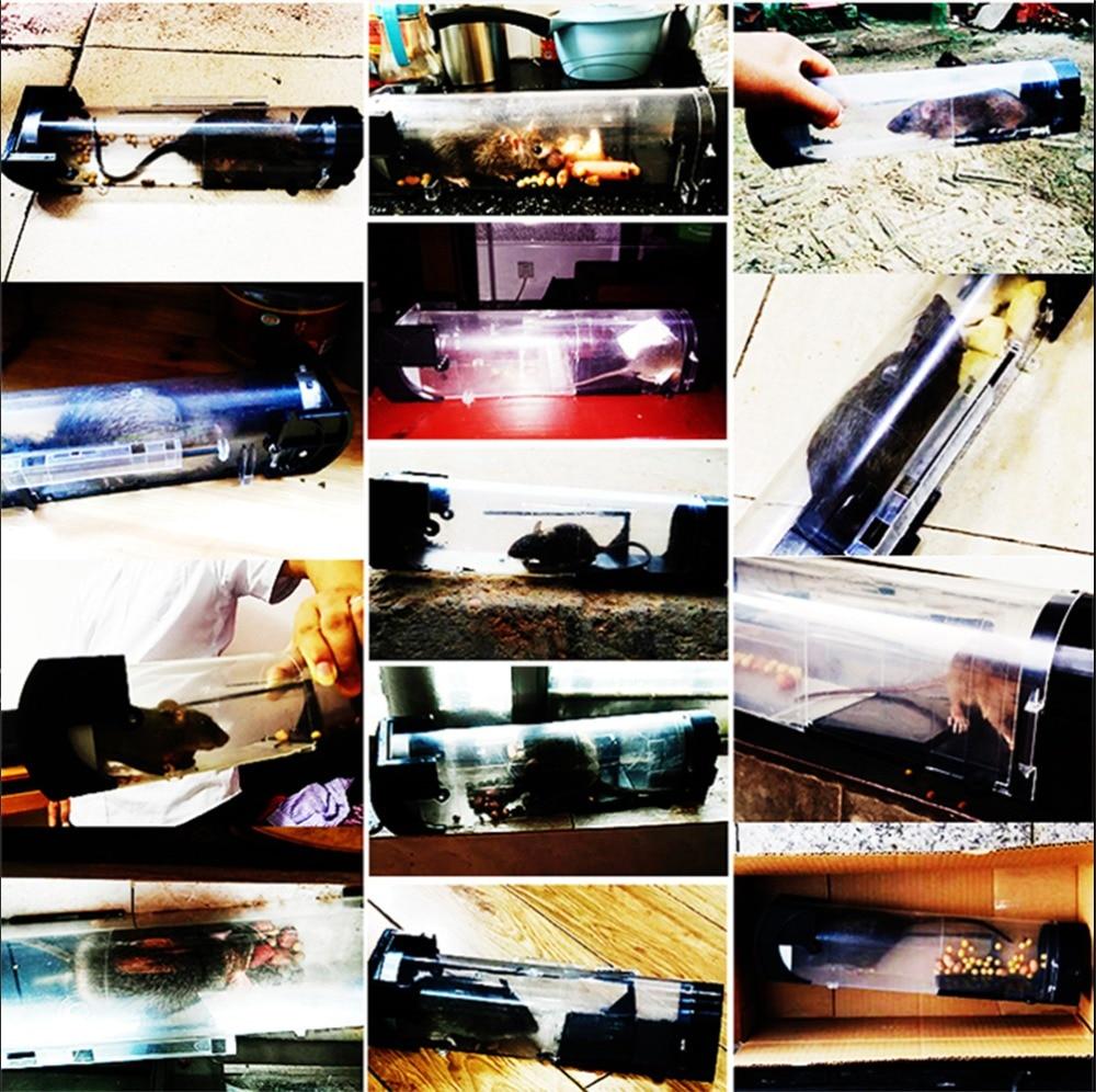 Үйде ашық зиянкестермен күресу үшін - Бақша өнімдері - фото 6