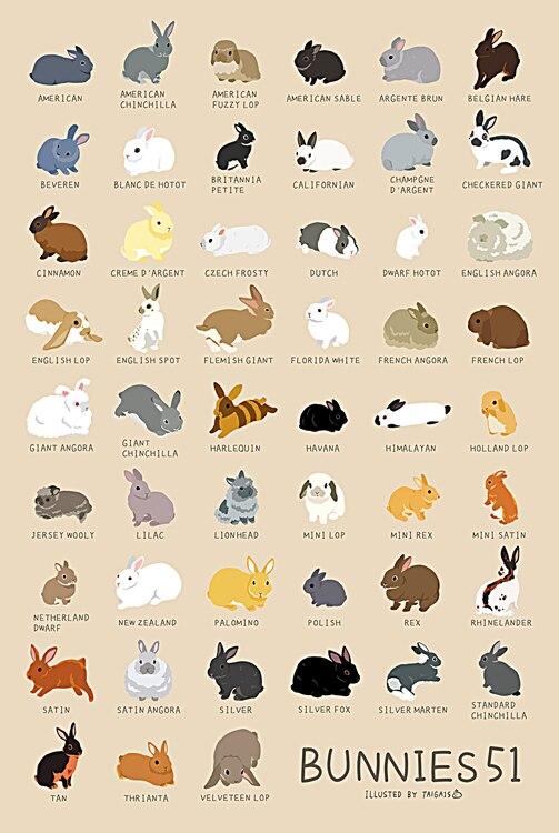 -Различные кроликов деревянная головоломка 1000 шт. ersion бумажный пазл белый карты взрослых детские развивающие игрушки