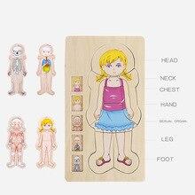 3D en bois multi-couche Puzzle jouets pour enfants garçons filles corps papillon grenouille Structure enfants apprentissage éducatif enfants cadeau