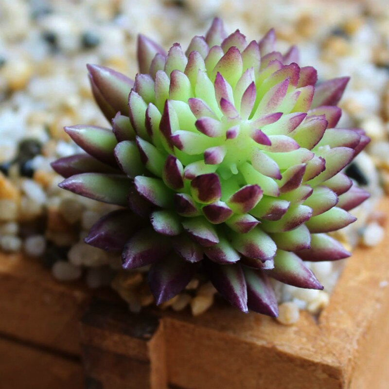 Flor suculenta Artificial para decoración del hogar, planta de PVC en miniatura para jardín, flores decorativas para el hogar DIY
