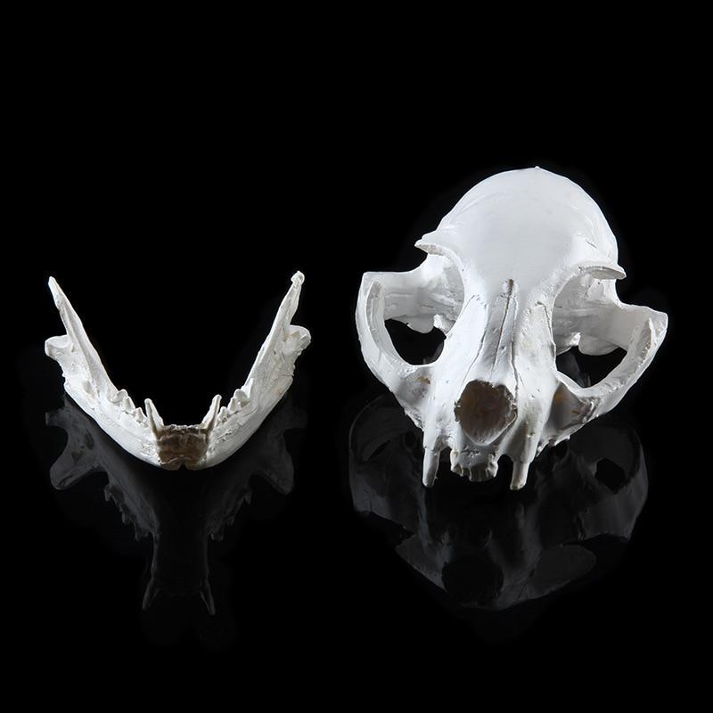 Игрушки для кошек смоляная модель скелета школьные Обучающие инструменты