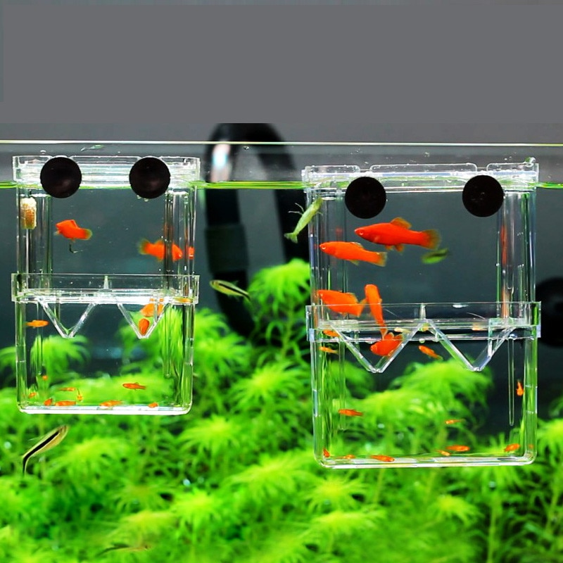 8*7*11cm caja de aislamiento de cría de peces clara de doble cubierta acuario criadero pecera incubadora peces casa