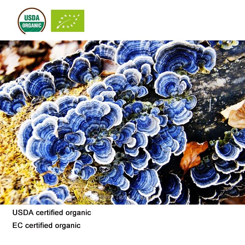 Extracto de hongo orgánico de nube certificado por USDA y EC 101 polisacáridos
