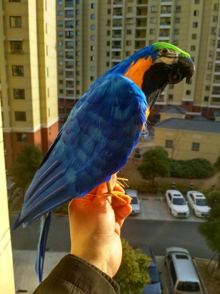 big simulation blue&orange parrot model foam&feathers half-wings parrot bird about 42cm