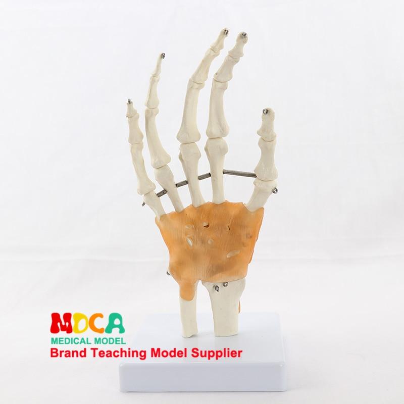 Modelo de articulação de mão flexível mão modelo de osso de pulso articulação ligamento palma osso esqueleto ensino médico msg004
