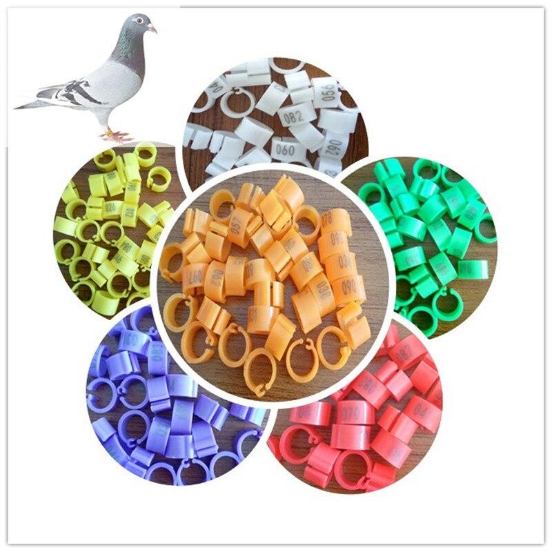 Aplicação de aves anéis do pombo de competência para as galinhas, piegon, pássaros, papagaios anel de divisão