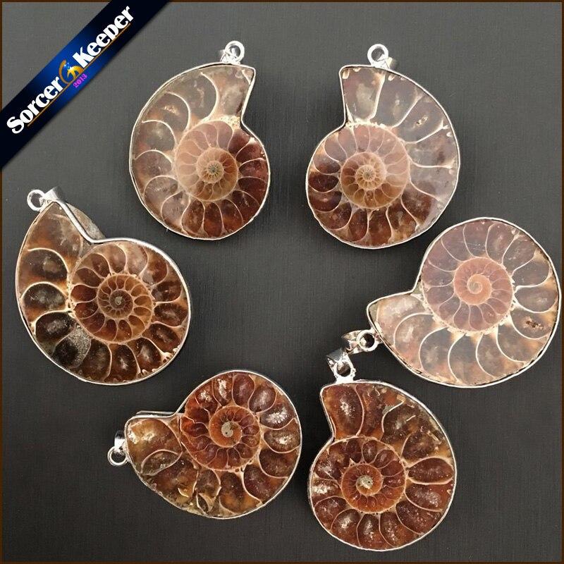 Piedra Natural, fósiles de amonita, conchas marinas, pendientes de caracola, reliquias oceánicas, collares de animales, joyería para hombres, 1 Uds LY932