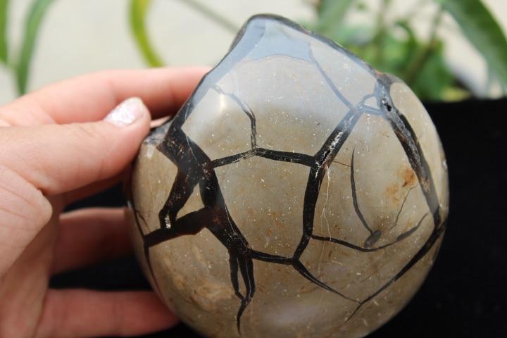 1295g RARE Large Dragon Septarian Crystal Sphere Geode Egg Healing