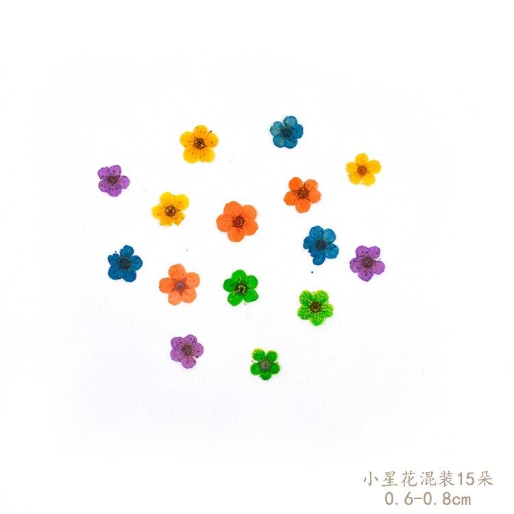 Flower Invitation Small star flowers diy  dried florizone glue natural branches handmade materials