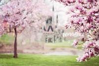 Castle Fairytale Princess Sleeping Beauty Magnolia Trees Pink Computer print children kids backdrops