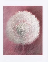 print modern white dandelion flower in the pink background canvas printings home decorative fine art spray painting for house