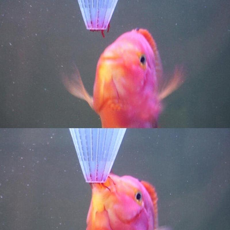 Alimentador de peces cono de acuario alimentador de insectos rojos con ventosa taza de alimentación taza de embudo para peces herramienta de alimentación para acuario alimentador
