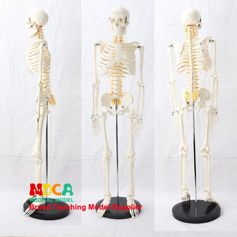 85CM Pillar type human.skeleton spinal nerve model medical Yoga Fitness learning bone model MGG203