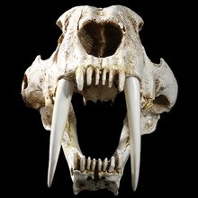 1:1 Size Amerikaanse Oude Dieren Saber Tooth Tiger Cat Skull Sabertooth Smilodon Fatalis Specimen Model Dier Skelet Model