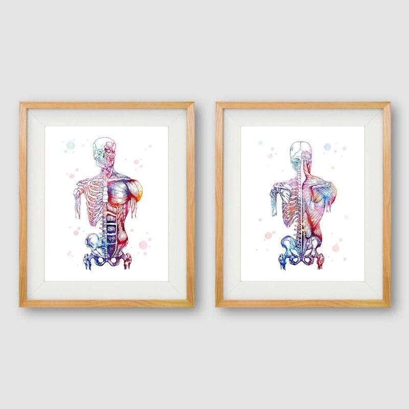 Músculos humanos impressão em tela arte e cartaz aquarela sistema muscular esqueleto anatomia pintura corpo arte médica impressão da parede decoração