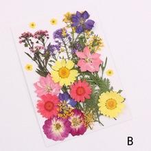 Flor prensada mezclada orgánica Natural flores secas DIY arte Floral decoración colección regalo DC112