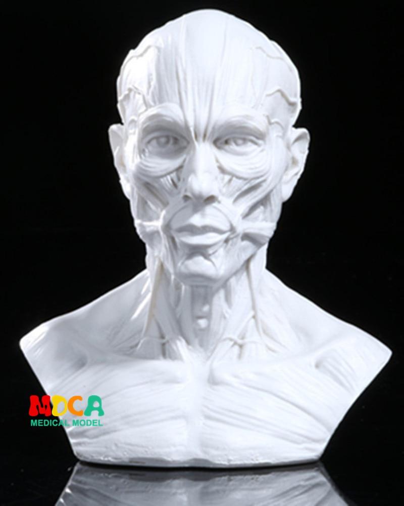 Рисование жизни в художественной студии, имитация мужской скелета, голова, мышцы, натюрморт, эскиз, обучающая модель RTSM206