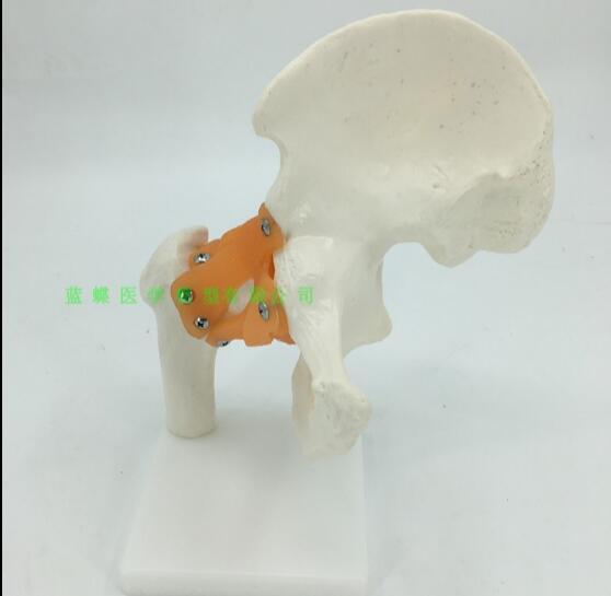 Модель Связки бедра человека функциональная модель сустава человека артикулярная модель кинематографический скелет человека