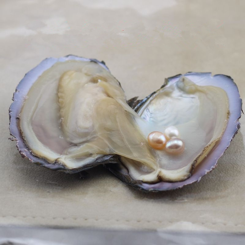 Perla de ostra cuenta de piedras preciosas perla de agua dulce Natural para agua dulce cultivada cuenta de arroz accesorios joyería para mujeres al por mayor