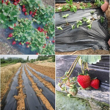 Black agricultural film strawberry PE film garden flower greenhouse plastic garden mulch film plant cover