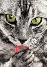 5D DIY Diamond Painting Party Decor animal black cat Diamond Embroidery Full circular Diamond Resin Home Decor