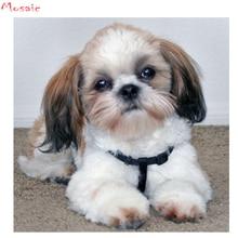 Shih tzu dog, diy 수제 다이아몬드 페인팅 동물 5d 풀 스퀘어 무료 배송 크로스 스티치 키트 다이아몬드 자수 모자이크 장식
