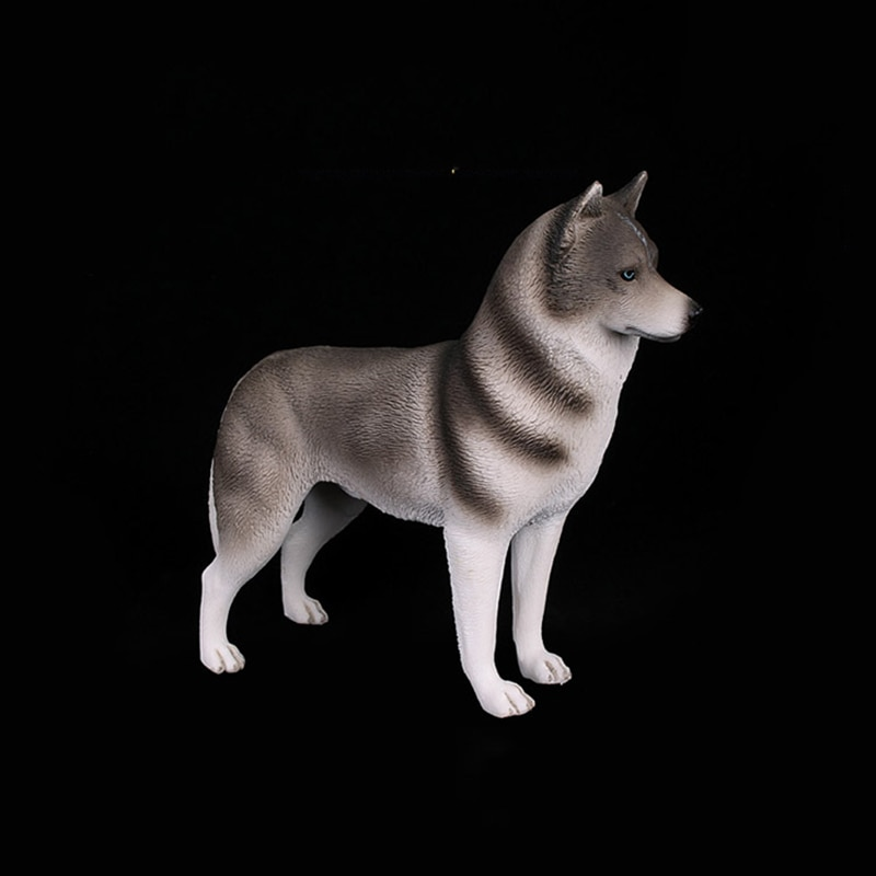 Perro husky Siberiano amarillo y gris, modelos de perros, regalos de animales...