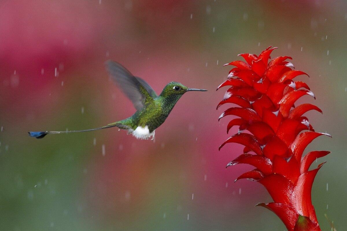 Cartel de tela impresión personalizada colibrí reunión néctar en la lluvia QT27 decoración de la pared decoración de la habitación decoración del hogar (marco disponible)