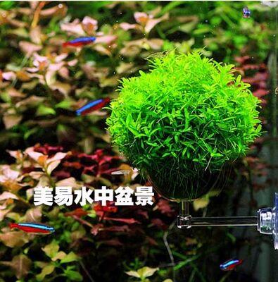 Krajobraz wodny podwodny krajobraz umywalka rośliny wodne w cylindrze mikro element dekoracji krajobrazu nowy produkt na sprzedaż roślin siewnych