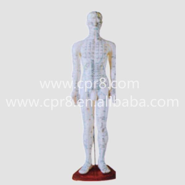 BIX-Y1006 Standard Acupuncture Model (Male) Acupuncture Model Acupuncture Points  60CM W005