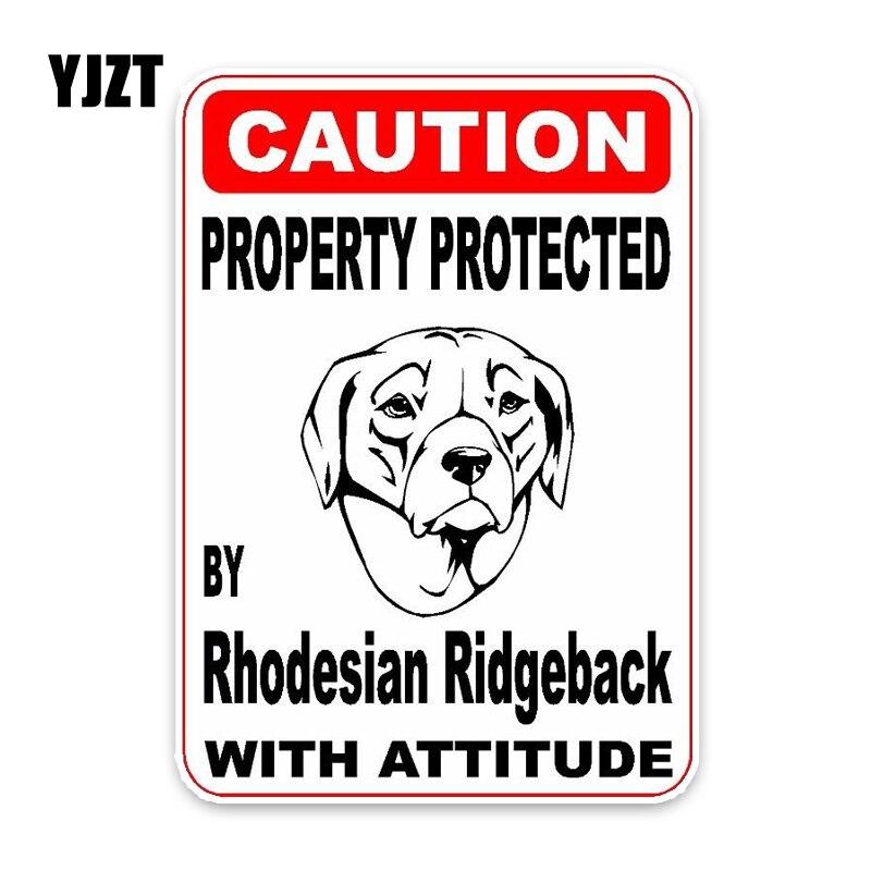 YJZT 11,4*16 см свойство защищено от родезиана Ridgeback декоративная собака для автомобиля бампер стикер окна C1-4732