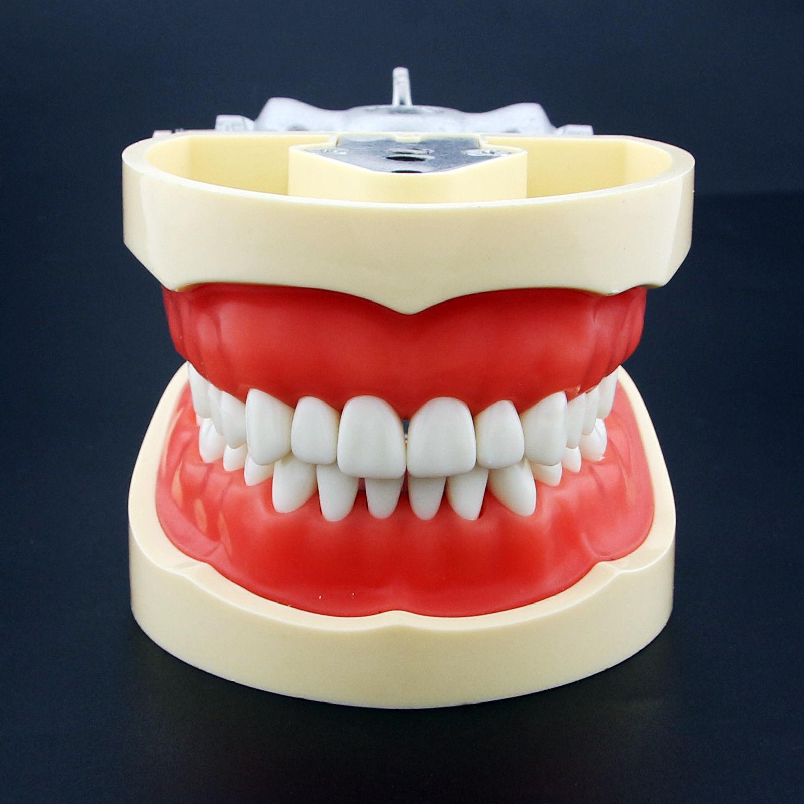 Kilgore nissin tipo dental typodon modelo 200 com dentes removíveis