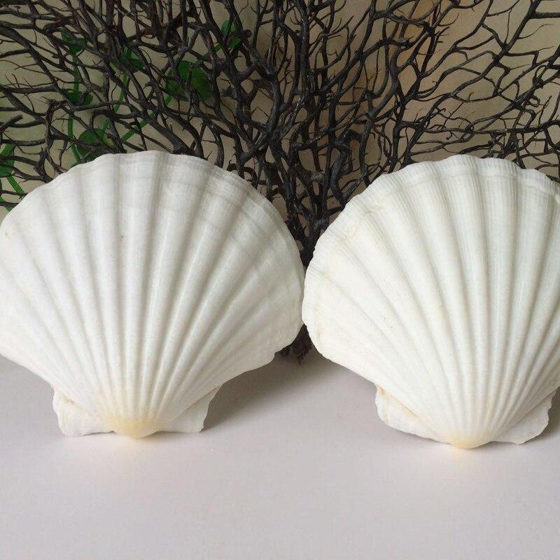 HappyKiss 2pcs/lot Natural conch Large shell white scallop white fan shell scallop fish tank 8-14cm white shells