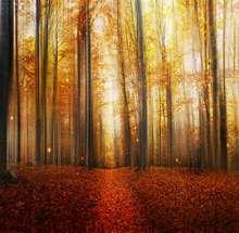 TR 7x5ft vinilo otoño bosque fotografía Fondo estudio foto Props otoño hojas camino puesta de sol bosque fotografía Fondo paño
