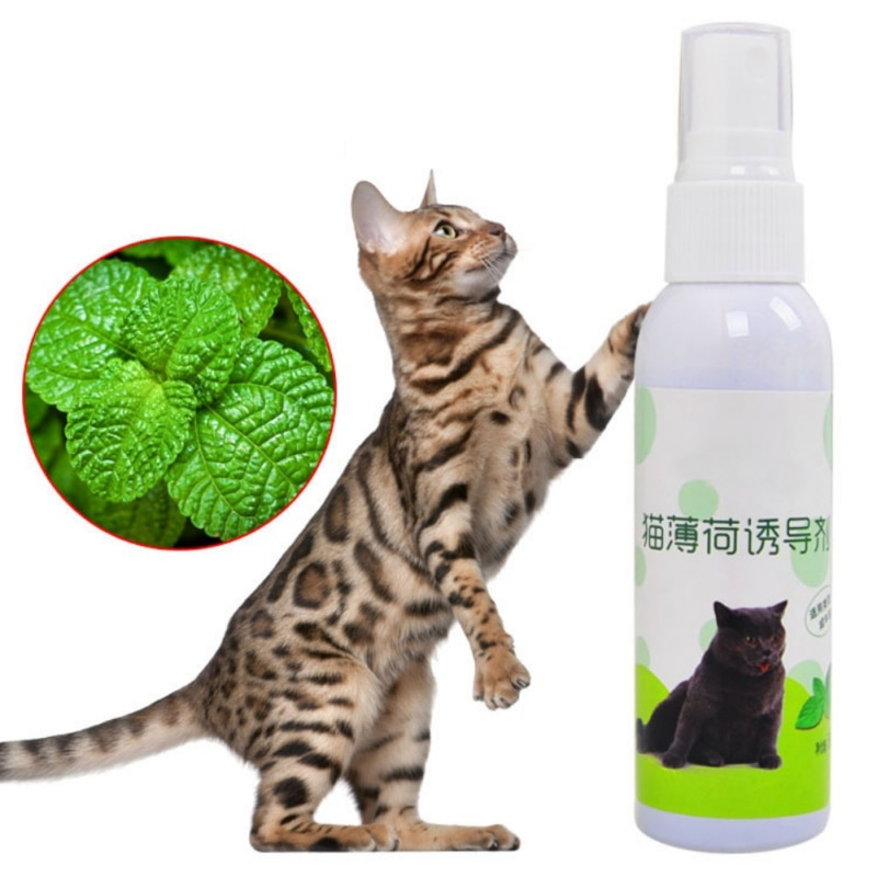 Juguetes de entrenamiento para mascotas gato Natural saludable orgánico Premium Catnip rascador Spray gato menta sabor gatos trata divertido juguete