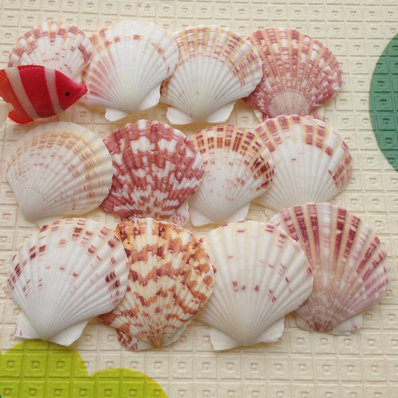 20 шт./лот, Для dec oration, корпус из натурального раковины, Цветной корпус, разноцветный escallop, 4-7 см, для аквариума yangtz, украшения, морской раковины