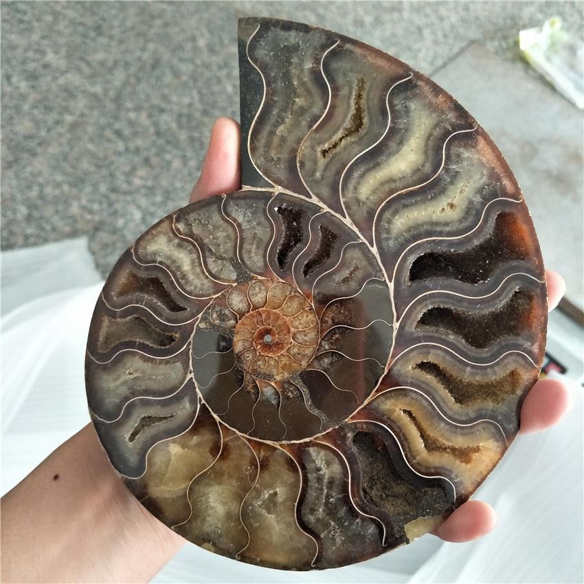 Большой размер 400-500 г, редкий переливающийся аммолитовый корпус, драгоценный камень с лечебным действием, образцы