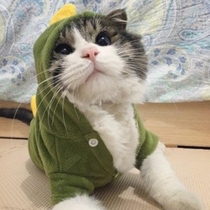 Ropa de Gato caliente ropa suave para mascotas para gatos disfraces divertidos para mascotas suministros de gatos rojo verde XS a XL 10d20Q