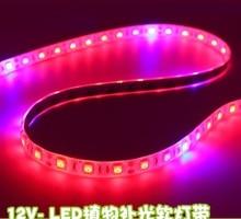 Paquet de 1,000 mètres, LED Flexible de bande de DC12V élèvent la lumière 12 watts/mètre