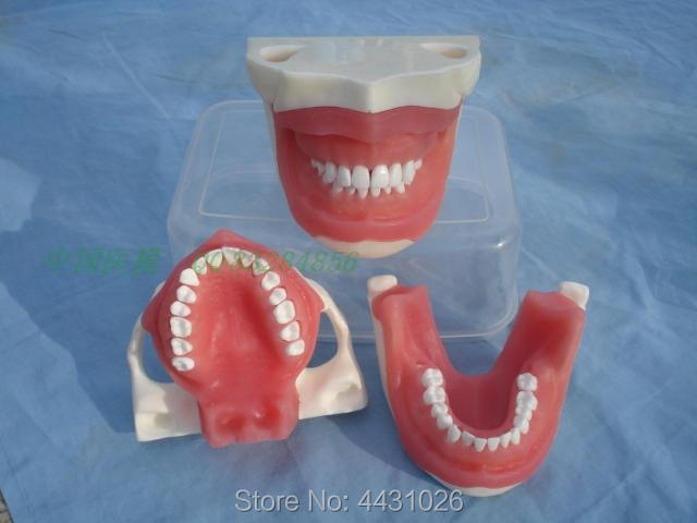 ENOVO Oral practice assessment tooth extraction anesthesia tooth extraction model oral surgery teaching practice model