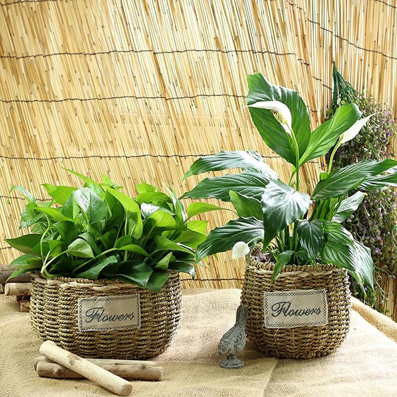 Punho redondo grama trançado ferro estande scindapsus aureus suculenta jardinagem vaso de vaso de vaso decorativo