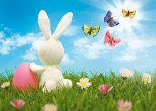VinylBDS 7x5ft printemps pâques photographie arrière-plan lapin papillon arrière-plans pour Studio Photo
